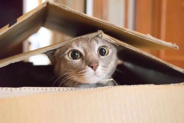 Кошки самодостаточны и игривы