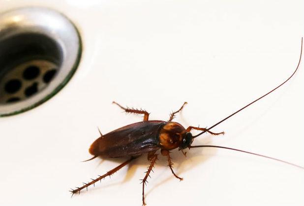 Причины тараканов в квартире - откуда и почему они у вас
