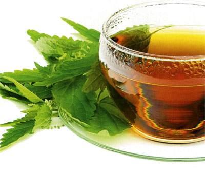Народные средства для повышения лактации - чай из крапивы