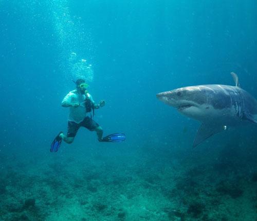 Тимати встретил акулу