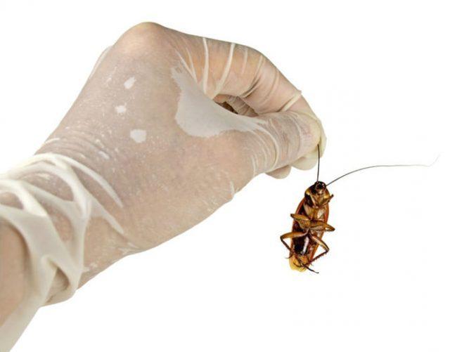 Лучшие средства от тараканов в квартире - отзывы, эффективные рецепты