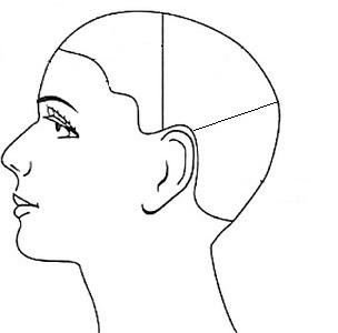 Зонирование головы1