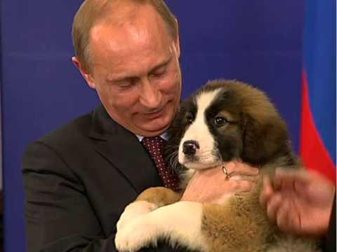 Владимир Путин с собакой