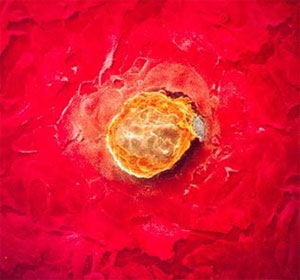 Алкоголь на ранних сроках беременности закладка органов