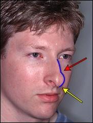 Как определить характер человека по форме носа