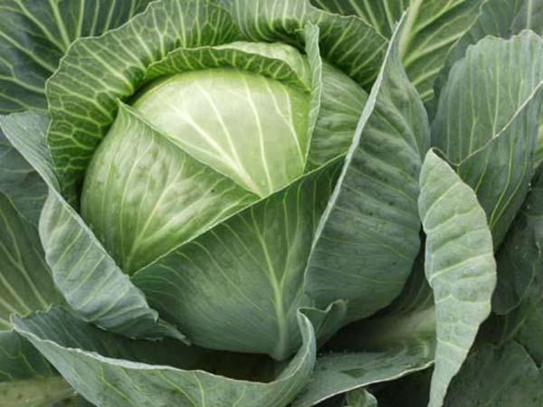 Лучшие народные способы лечения мигрени - приложить капустный лист к голове